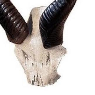 Kudu Skull