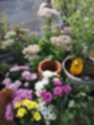 garten-saison-frueh-herbst-astern.jpg