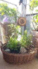 Balkon-Garten, Insektenhotel, Strauchrose, Johannisbeere, Kräuter
