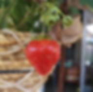 garten-naschbalkon-erdbeere.jpg