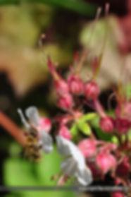 Insektenhotel - Pflanzen, Storchenschnabel