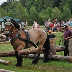 horse@work