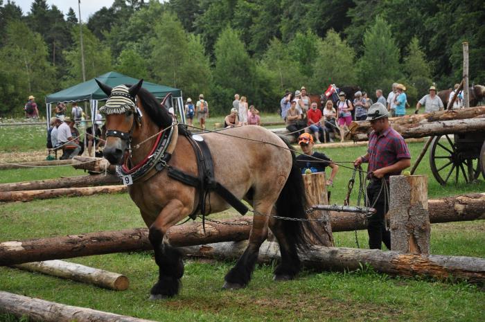 Kaltblutpferd im Parcour, Fuhrmannstreff Neuhausen ob Eck 2017