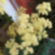 garten-herbarium-maedesuess.jpg