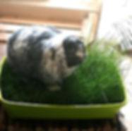 garten-pflanzen-haustiere-ringo.jpg