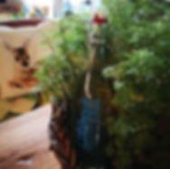 garten-herbarium-colakraut.jpg