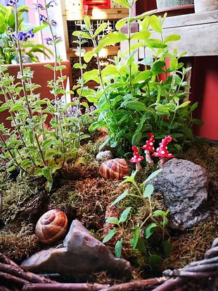 garten-impressionen-juni-pilze.jpg