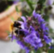 garten-insektenhotel_biene1.jpg