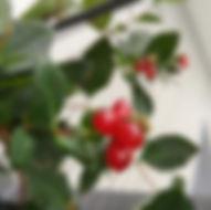 Geissblatt - Herbarium, Pflanzeverzeichnis G