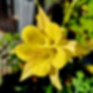 Akelei - Herbarium, Pflanzenverzeichnis