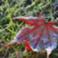 garten-saison-spaet-herbst-ahorn.jpg