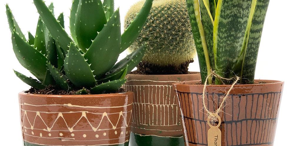Dessert-Green Planter (Set)