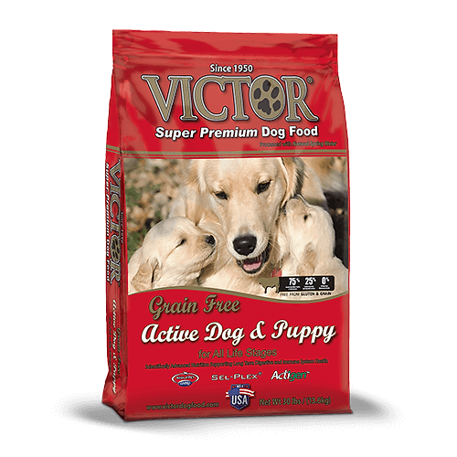 Is Dry Or Canned Food Best For Puppy