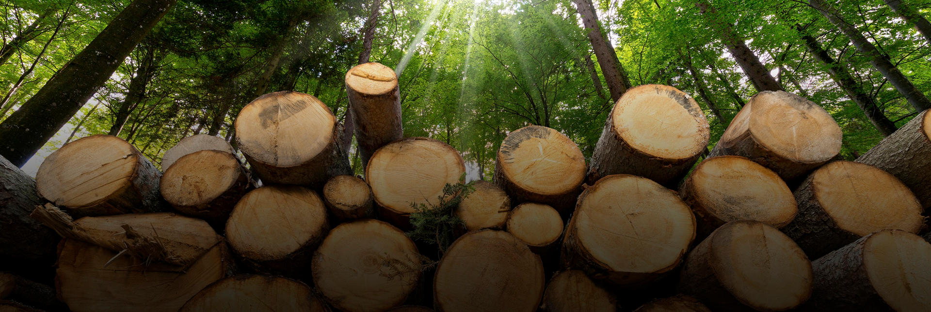solving-the-lumber-crisis-page-banner-28
