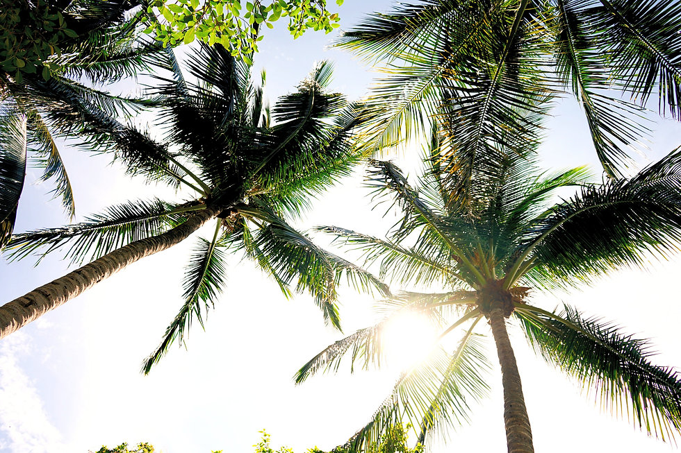 high-angle%20photography%20of%20coconut%20trees%20at%20daytime_edited.jpg