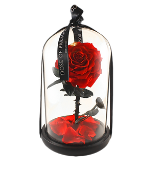 Red Rose Dome In Glass