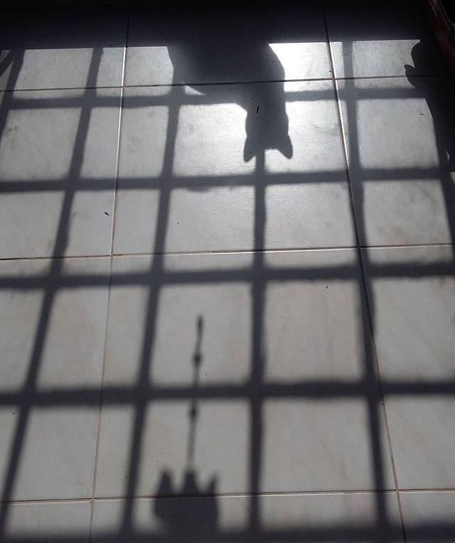 Sombras felinas