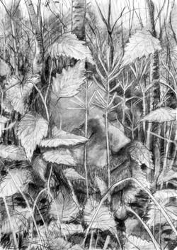 nettle head [charcoal on paper]