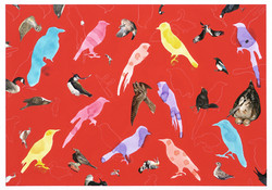 bird pattern 3