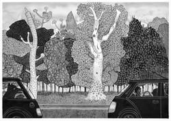 white tree road trip