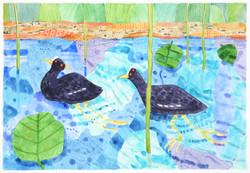 waterbird 2 [watercolour on paper]