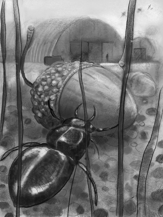 Here's another bug pic loosely based an a lesser stag beetle. (iPad drawing again).