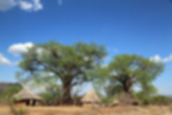 EcoProducts B'Ayoba baobab tree village.