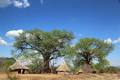 EcoProducts B'Ayoba baobab tree village.