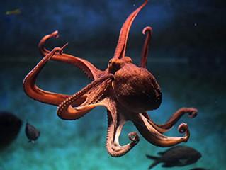 The unforgiving Octopus.