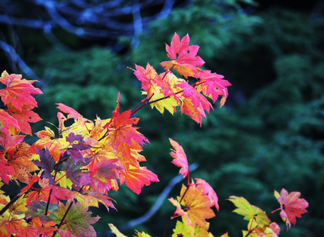 Divisive Creeds and Lovely Leaves: Autumn's Instructions for finding our true identity