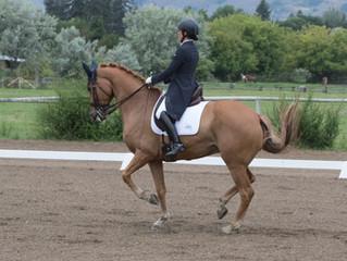 It's a Grand Prix Horse!