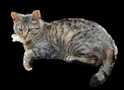 cat-946548_Clip