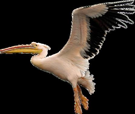 PNG images: bird,