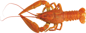 Free lobster png images.