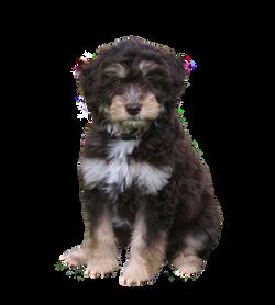 puppy-856661_Clip