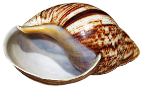 shell-2479830__340.png