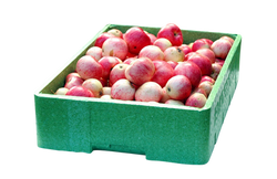 apple-19410_Clip