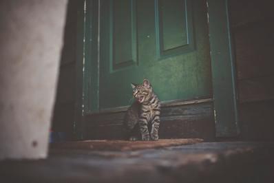 Cossyimages Kitten (19).jpeg