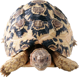 Complete animal free PNG collection, Free PNGs has tens of thousands of free transparent cutout PNG  images to download today.   - Top transparent PNG images. - Biggest PNG collection on the net.  - Unlimited downloads. - Check us out today. - Latest turtle PNG images.