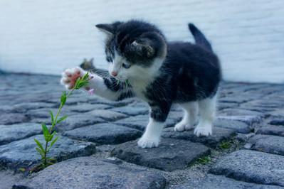 Cossyimages Kitten (6).jpg