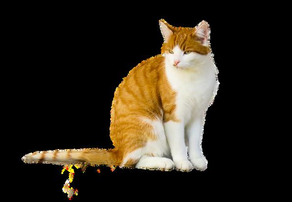 PNG images: cat