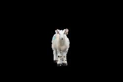 sheep-369173_Clip