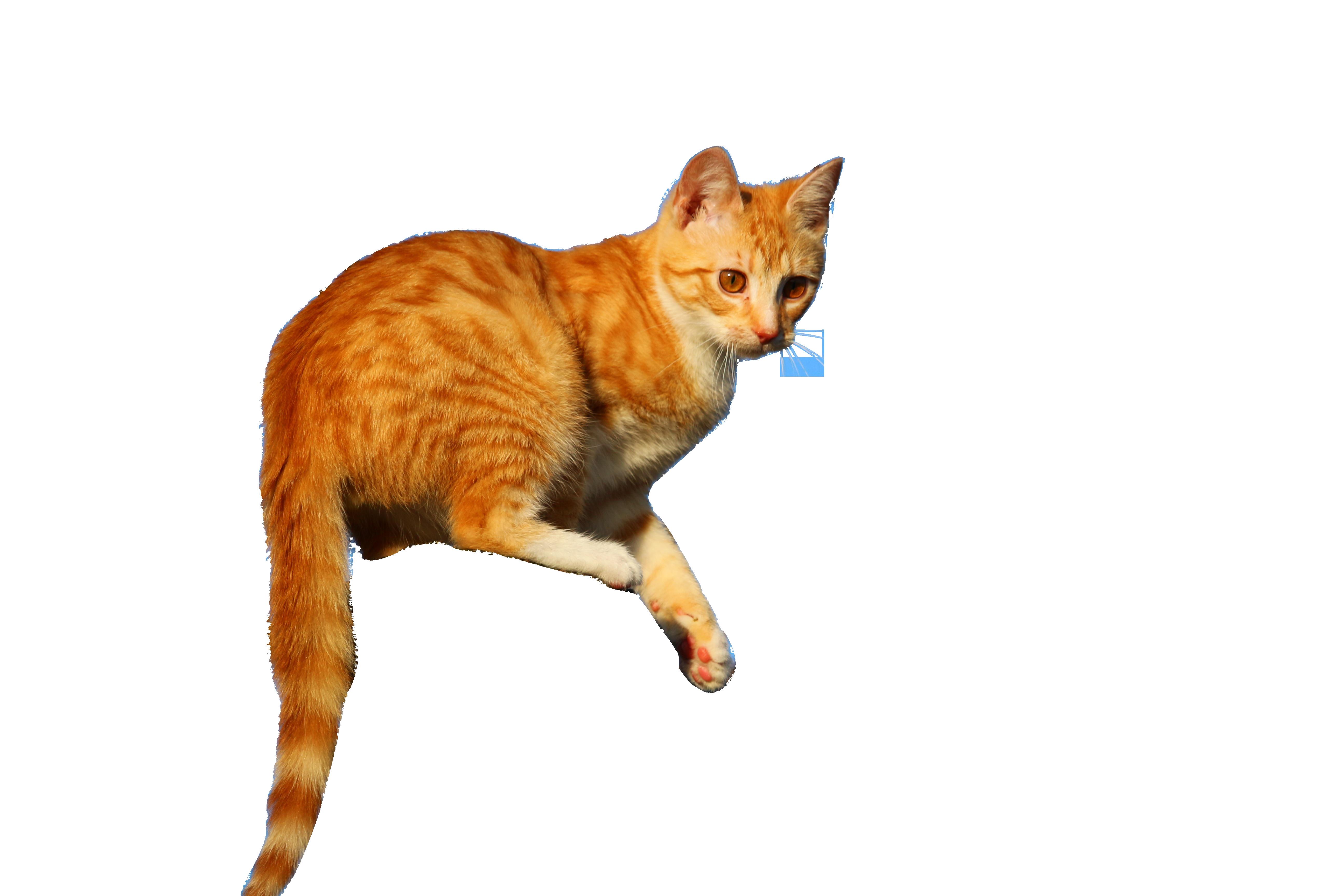 cat-1230244_Clip