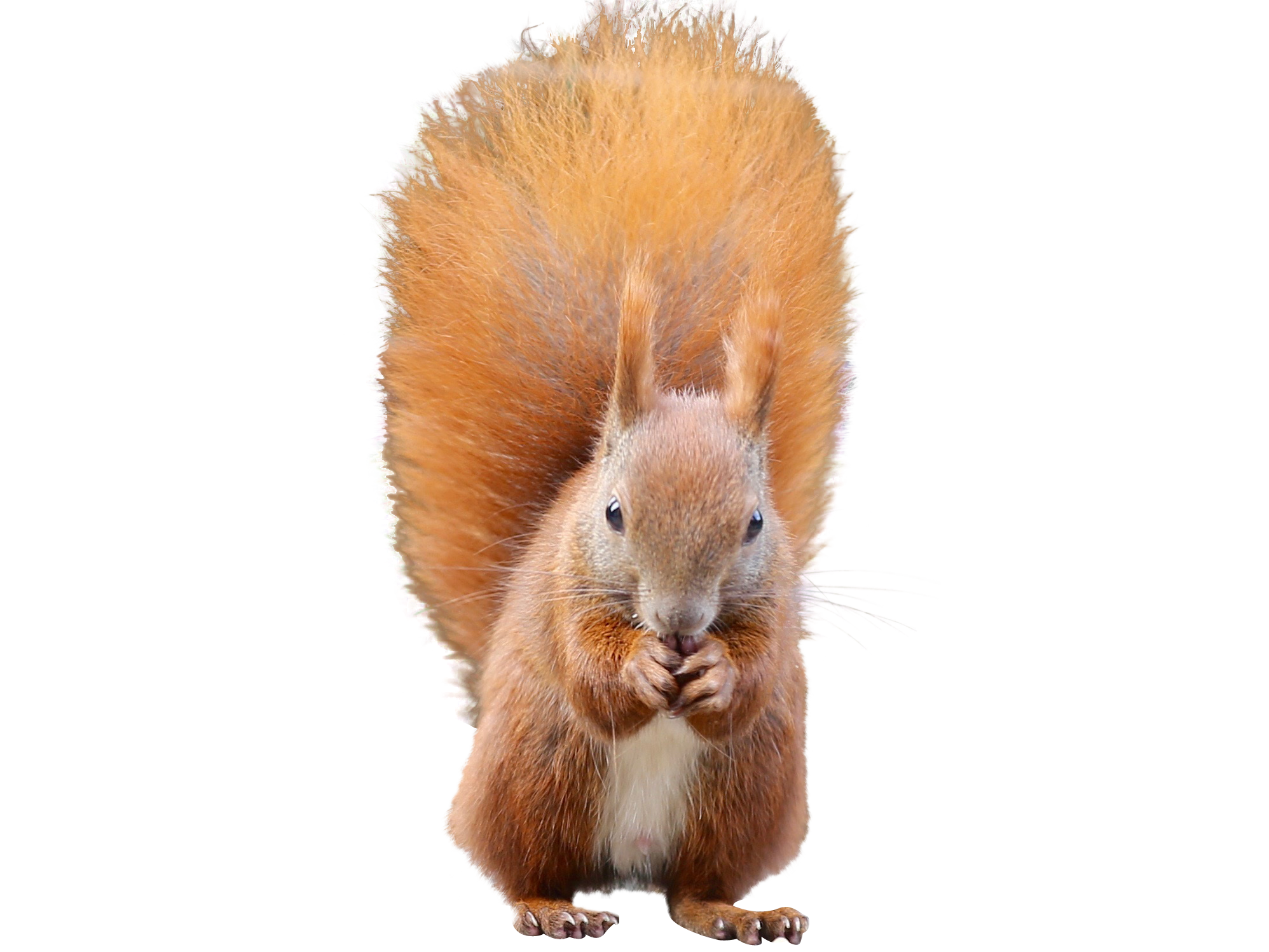 squirrel-1001701_Clip