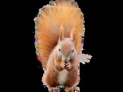 squirrel-1001701_Clip