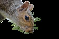 squirrel-1225969_Clip