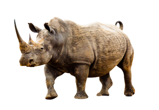 PNG images: rhino