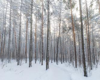 Cossyimages Winter (7).jpg