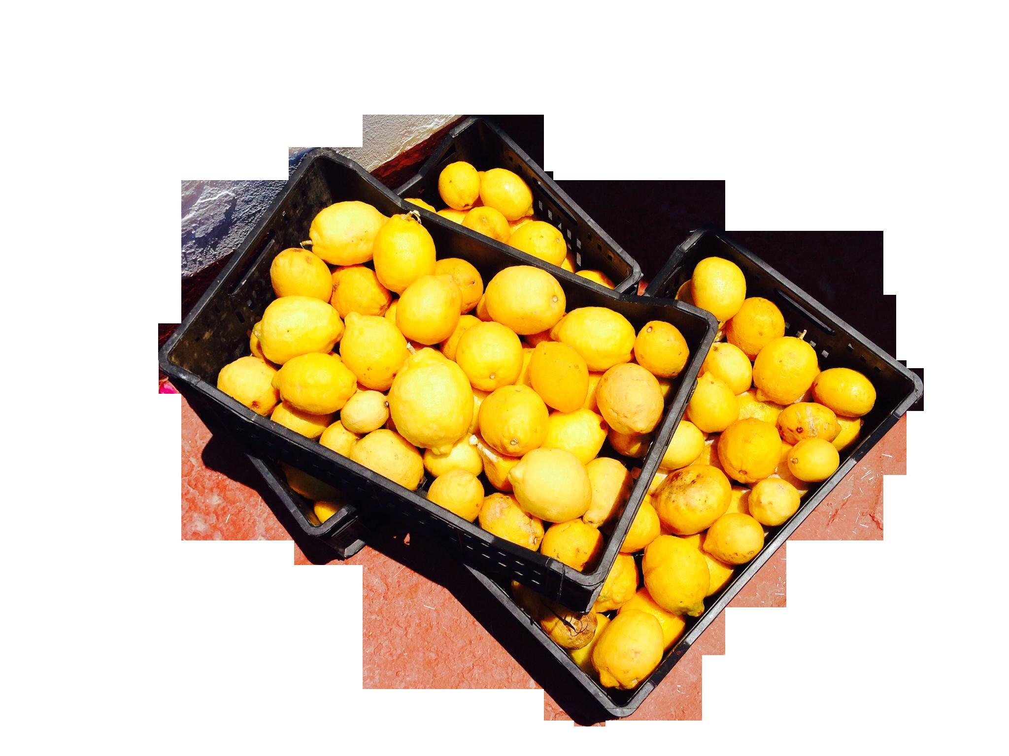 lemons-372207_Clip