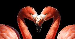 flamingo-600205_Clip